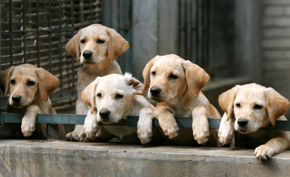 Cinci pui de câine stând pe un zid de beton.