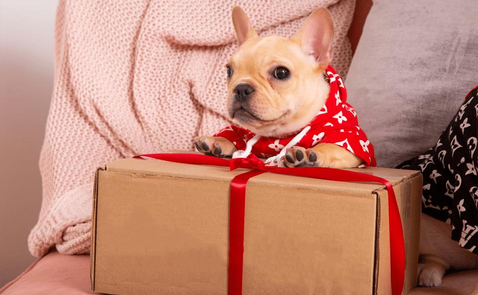 Cățel stând pe o cutie de cadouri.