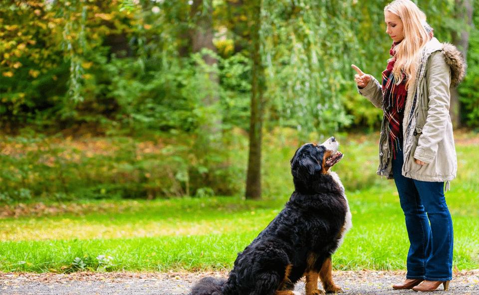 Femeie dresându-și câinele în parc.