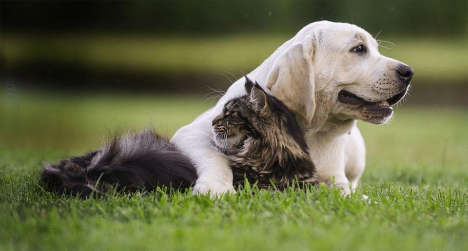 Câine stând în iarbă lângă o pisică.