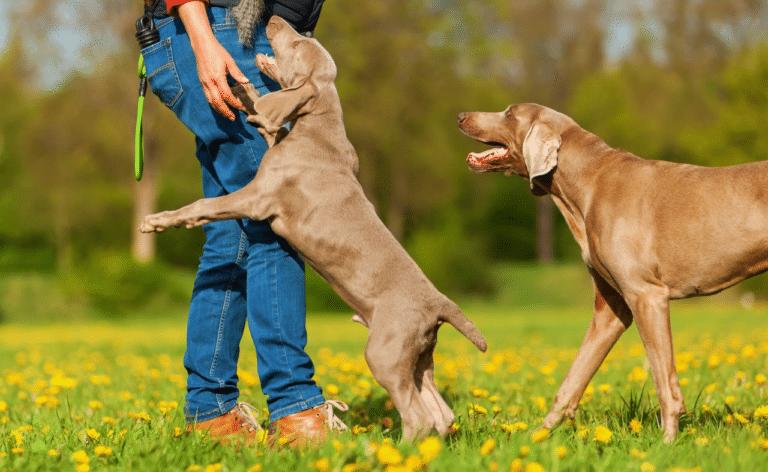 Câine urcându-se pe stăpâna lui.