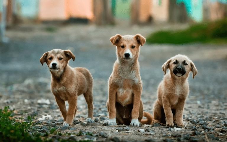 Trei cățeluși pe un drum de pietriș.