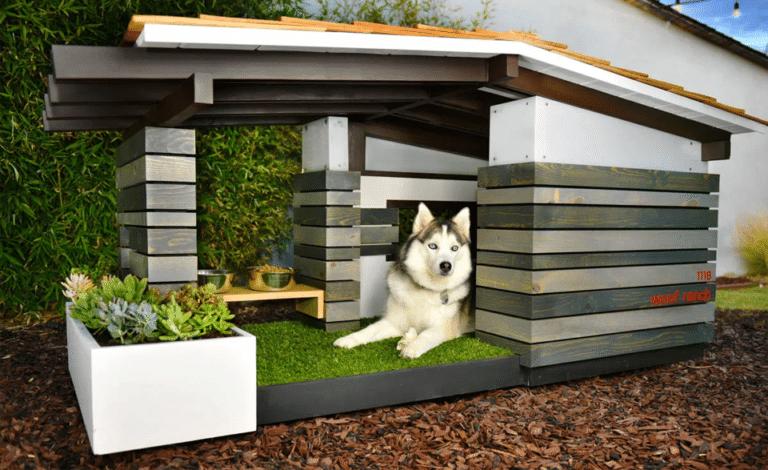 Căine husky stând într-o căsuță pentru căței.