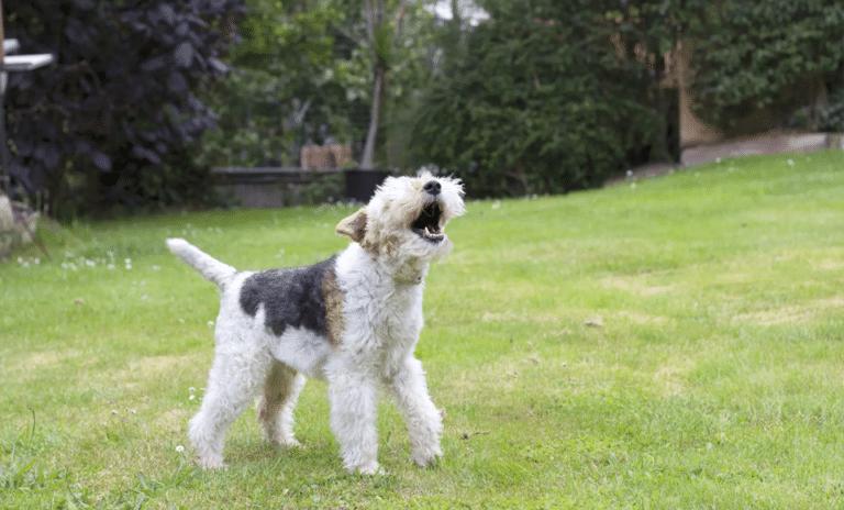 Câine stând în iarbă și lătrând.