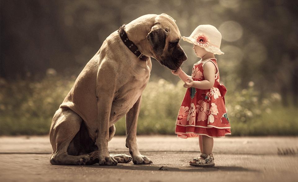 Câine mângâiat de o fetiță cu pălărie albă.