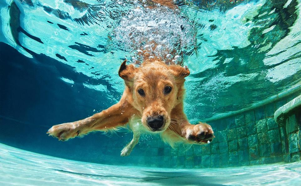 Câine înotând pe sub apă.