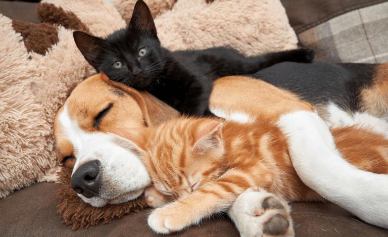 Catel dormind cu o pisica neagra in spatele lui.