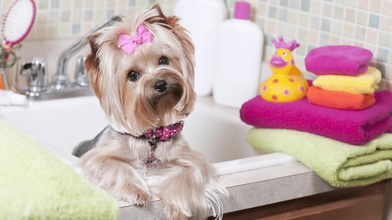 Cățel cu o fundă roz stând pe marginea căzii în baie.
