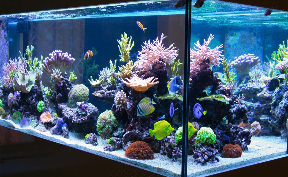 Acvariu de recif vazut de aproape.