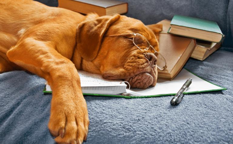 Cățel cu ochelari pe ochi dormind cu capul pe cărți.