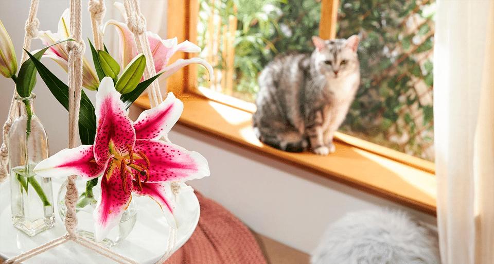 Vaze cu crini in prim plan cu o pisica in spate.