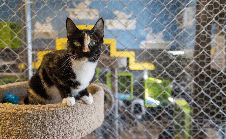 Pisica stand in culcusul ei intr-un centru de adoptie.