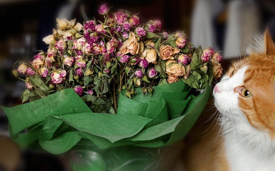 Pisica mirosind un buchet de trandafiri.