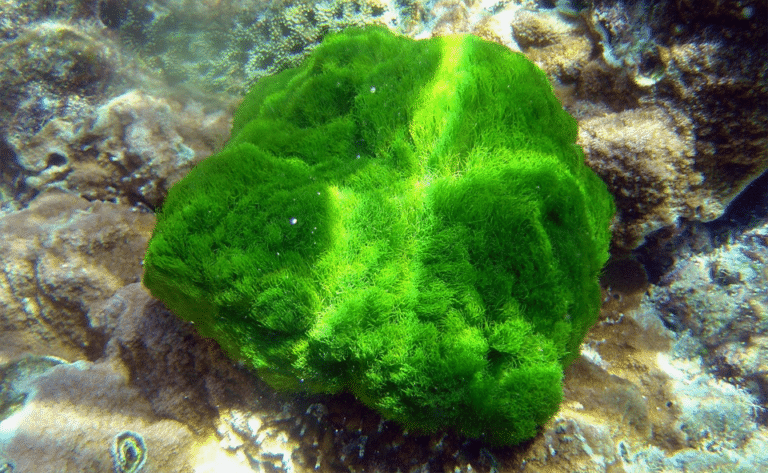 Piatra acoperita de alge verzi increngătura Chlorophyta