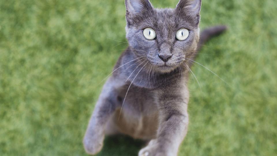 Pisica vazuta de aproape.