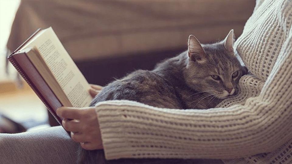 Femeie citind cu o pisica pe burta.