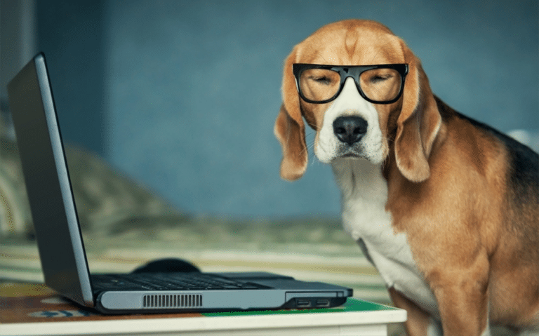 Catel cu ochelari langa un laptop.