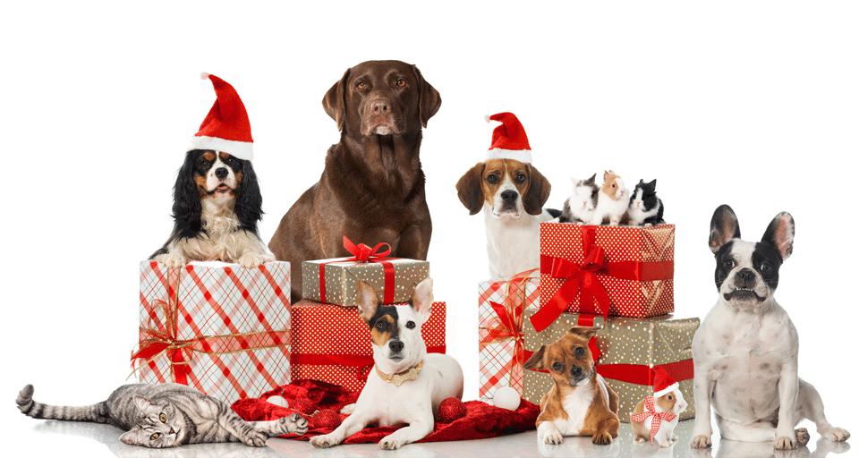 Diferite animale cu cadouri.