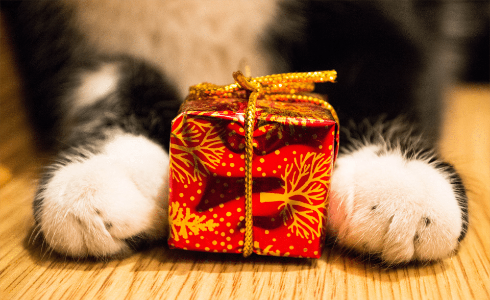 Cadou tinut intre labute de o pisica.