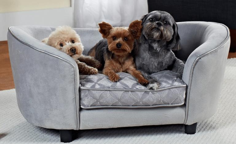 Trei catei stand intr-un culcus stil canapea.