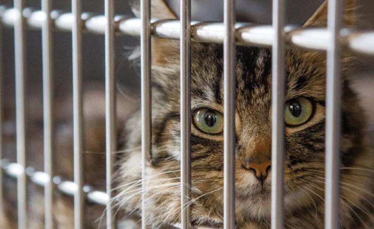 Pisica in spatele unui gard de sarma vazuta de aproape.