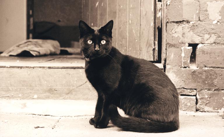 Poza alb-negru cu o pisica neagra.