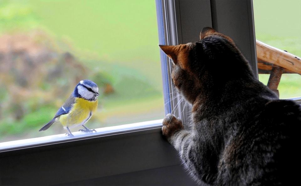 Pisica si pasare privindu-se printr-un geam.
