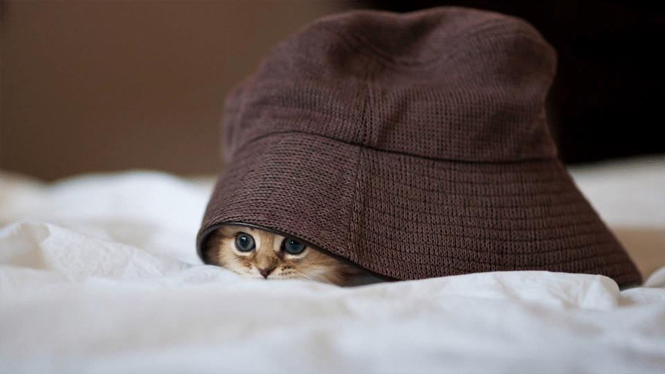 Pui de pisica ascuns sub o caciula.