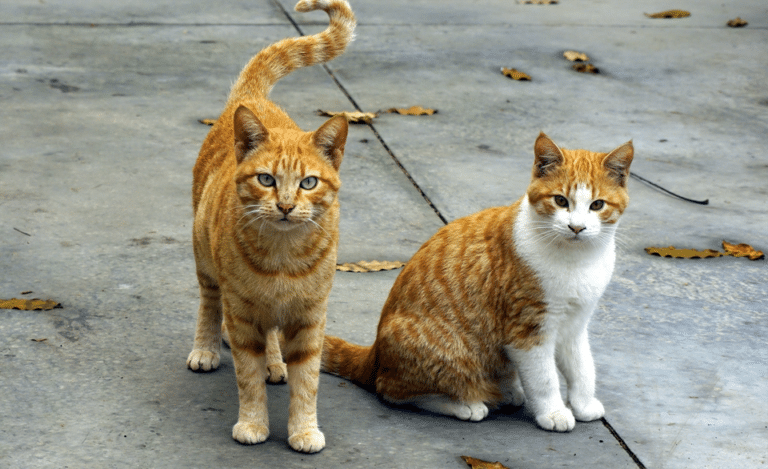 Doua pisici stand pe o strada impreuna.