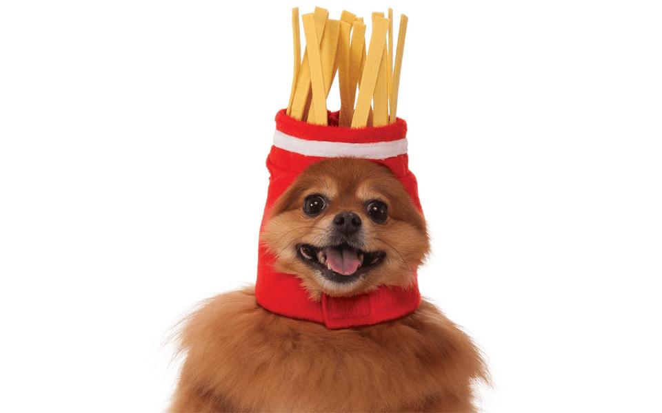 Caine cu un costum cu cartofi prajiti pe cap.