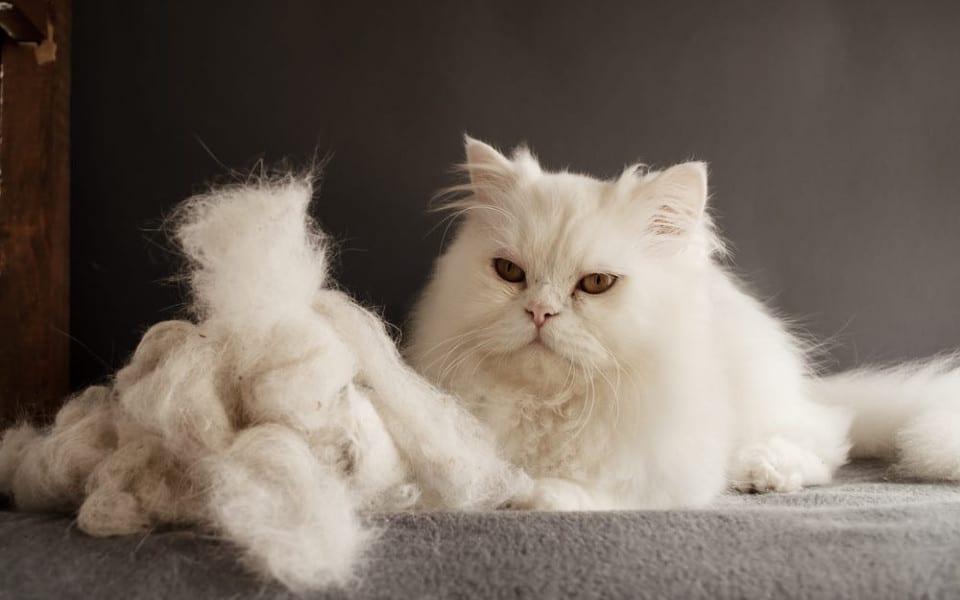 O pisica alba ce sta langa un morman de blana