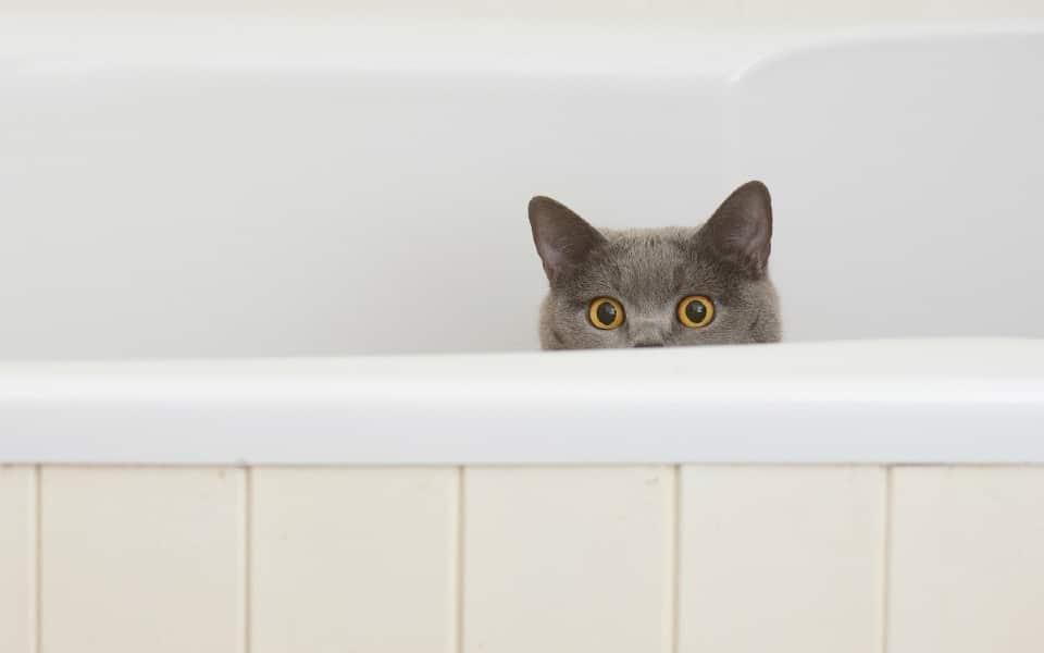 Capul unei pisici ce sta intr-o cada