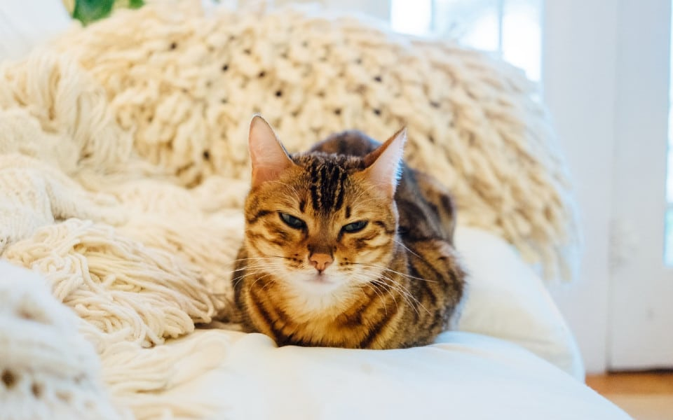 Pisica portocalie ce sta pe pat