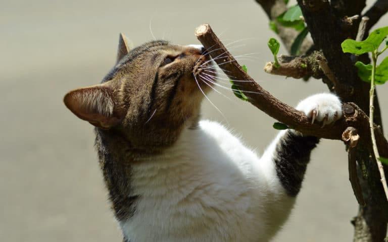 O pisica ce miroase o ramura