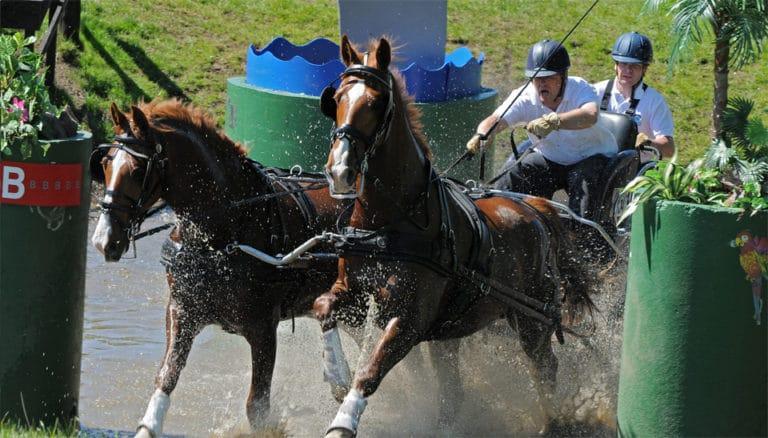 Doi cai tragand o caruta cu doi pasageri prin apa.