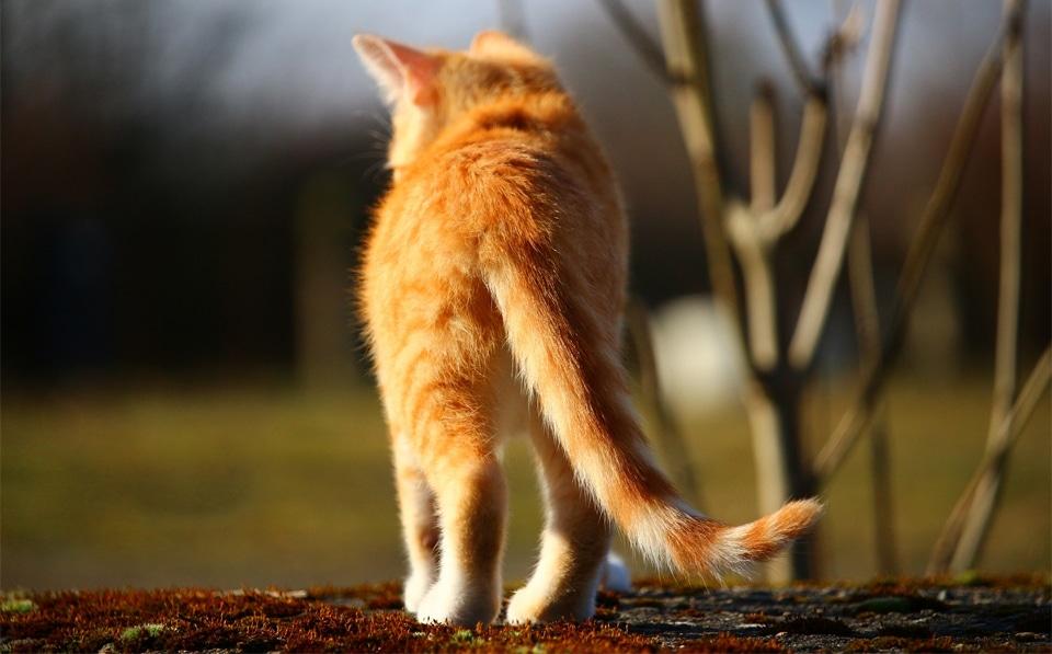 Pisica vazuta din spate.