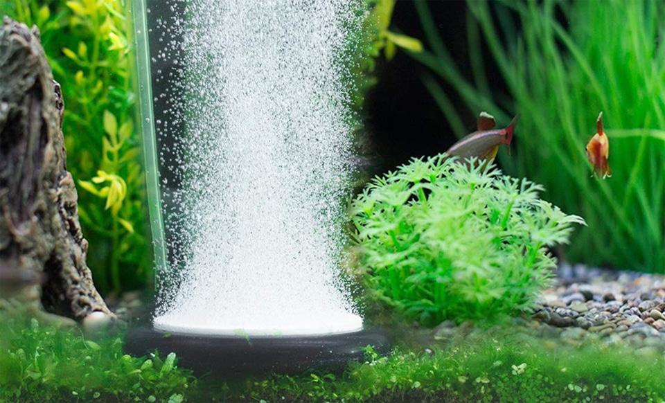 Pompa de aer intr-un acvariu cu pesti.