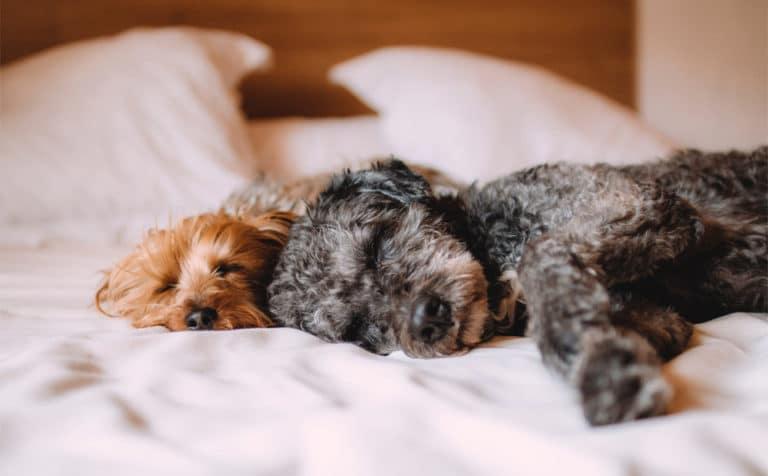 Catel dormind in pat.