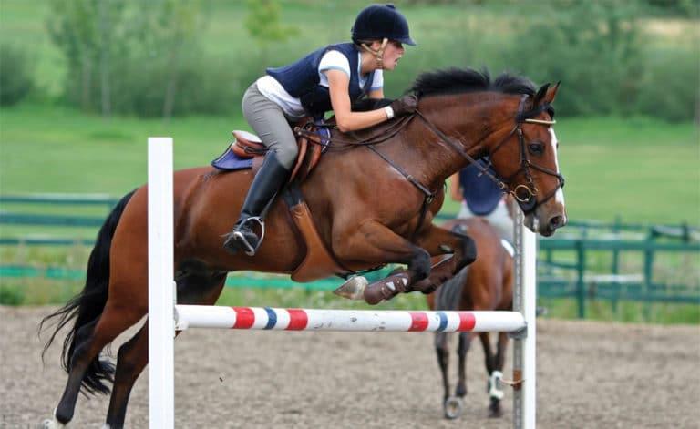 Cal cu calaret sarind peste un obstacol.