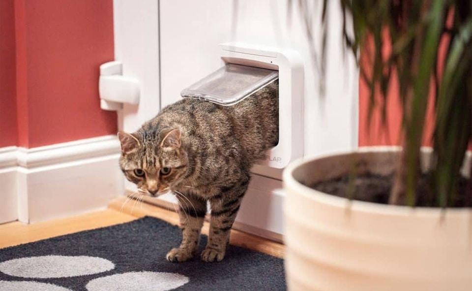 Pisica intrand in casa printr-o usa pentru pisici.