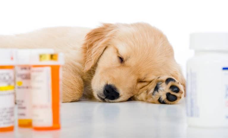 Pui de catel dormind langa niste flacoane cu medicamente.