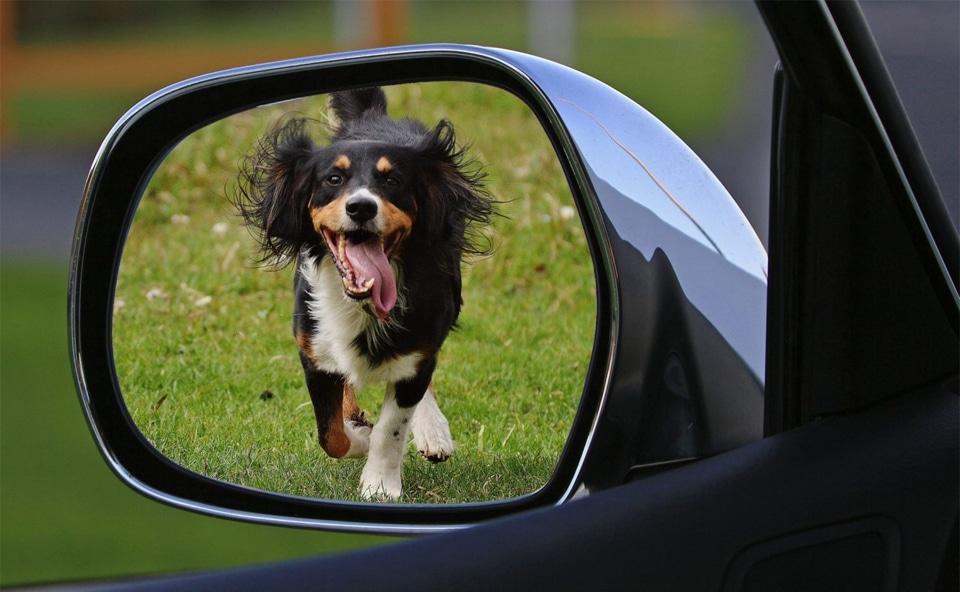 Caine vazut in oglinda retrovizoare a unei masini.