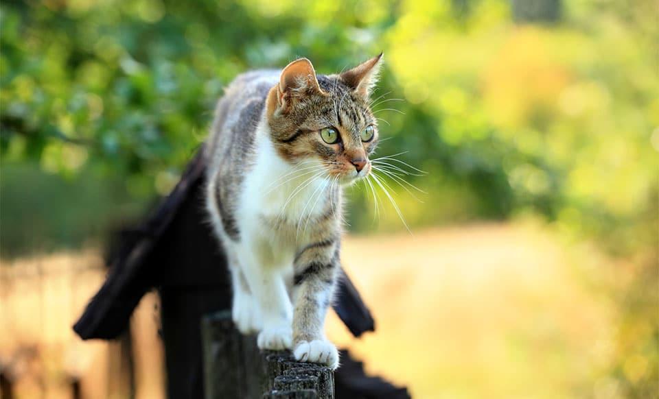 Pisica pe un gard.