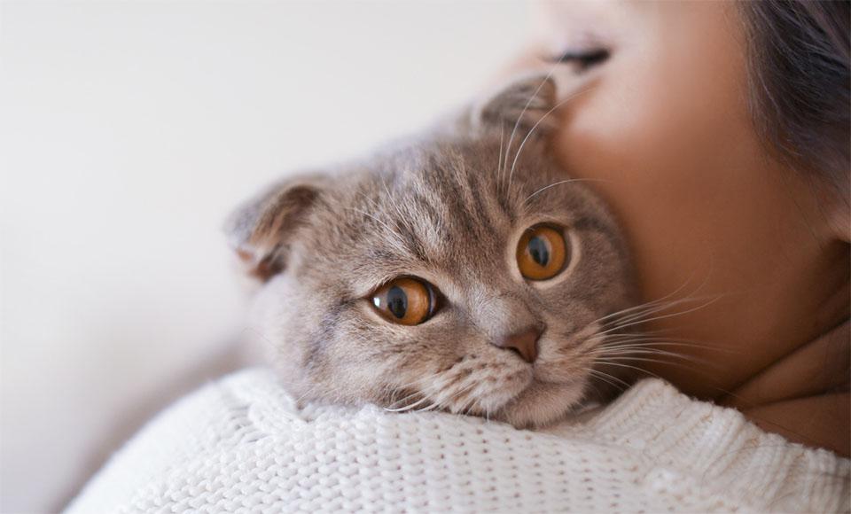 Pisica tinuta in brate de stapana sa.
