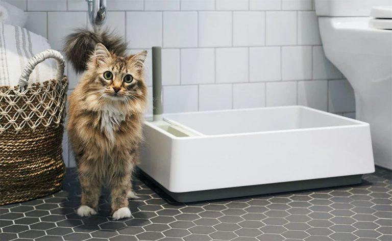 Pisica langa o litiera in baie.