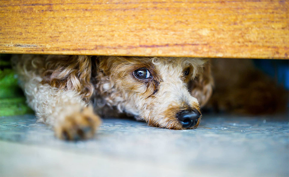 Catel speriat stand sub un pat.