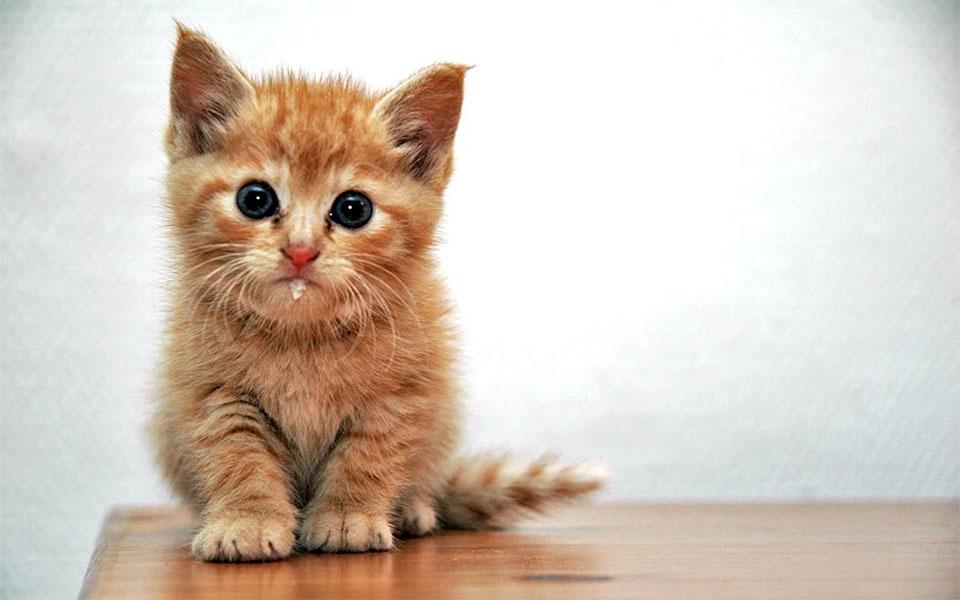 Pui de pisica salivand.