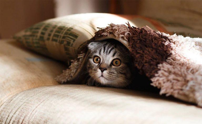 Pisica sub o patura pe o canapea.