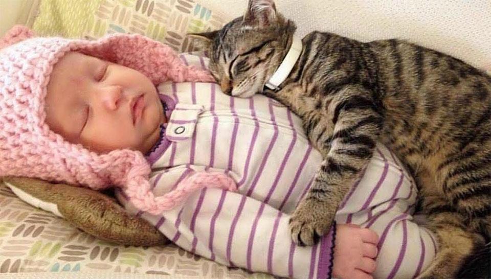 Pisica dormind peste un bebelus.