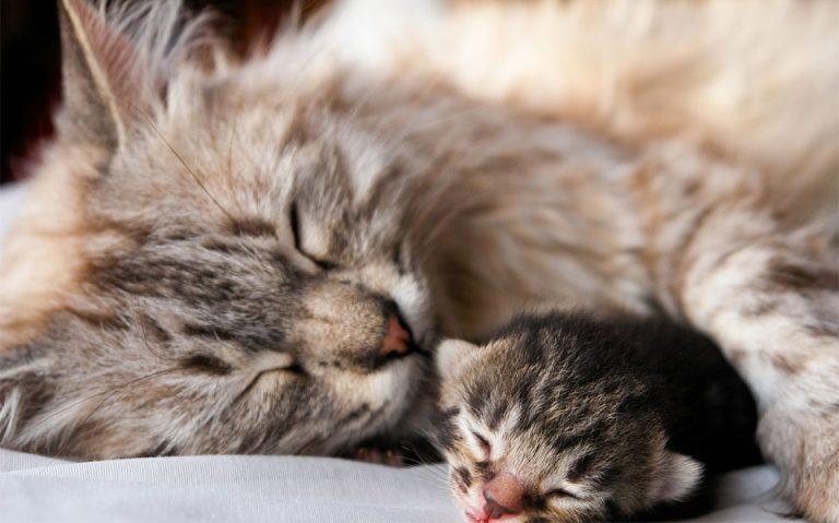 Pisoi dormind alaturi de mama sa.